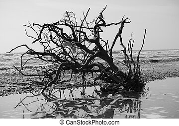 A tree that was left behind from huricane Ike.