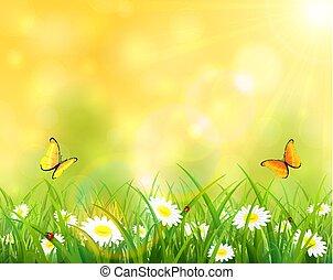 solfyldt, baggrund, hos, græs, og, blomster