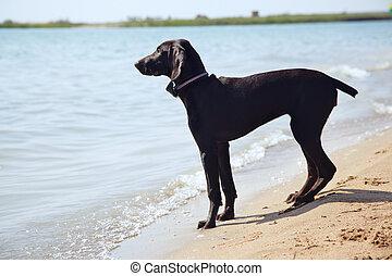 solidão, de, cão