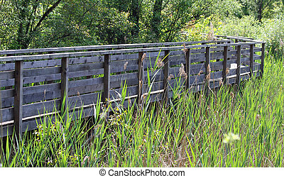 wooden walkway for visiting natural oasis in the reeds of a natu