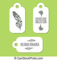 Handdrawn Illustration - Health and Nature Set - Solidago...
