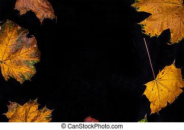 solide, arrière-plan., feuilles, noir, automne