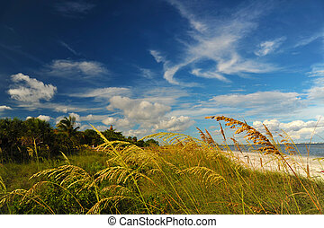 solig, strand, florida, västra