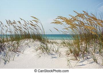 solig, strand sandpappra, dyner, och, hav havrer