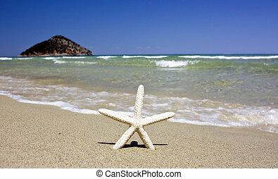 solig, strand, sjöstjärna, sommar