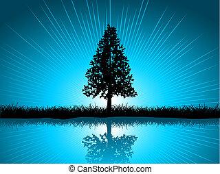 solitário, árvore abeto