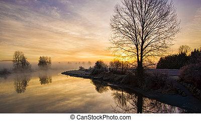 solitário, leafless, árvore, em, amanhecer, com, nevoeiro