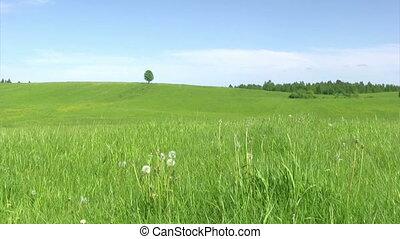 solitaire, été, paysage, arbre