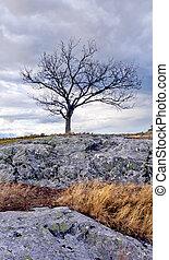 solitaire, arbre