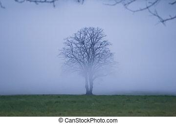solitaire, arbre, brouillard