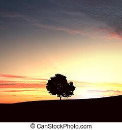 solitaire, arbre, et, coucher soleil