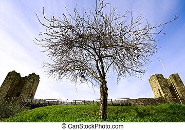 solitaire, arbre, forteresse, tout