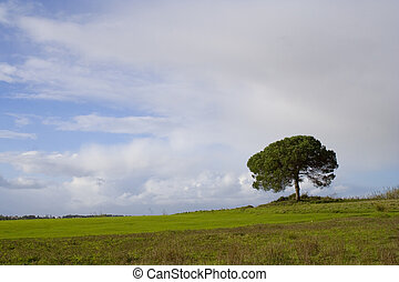 solitaire, arbre, ii
