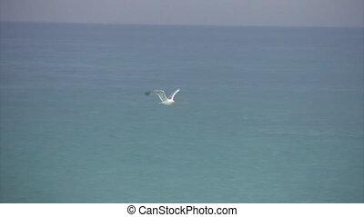 solitaire, au-dessus, voler, mer, blanc, seagul