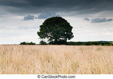 solitaire, ciel, sur, arbre, champ, dramatique