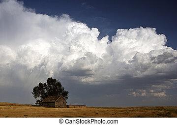 solitaire, derrière, cumulonimbus, arbre, nuage