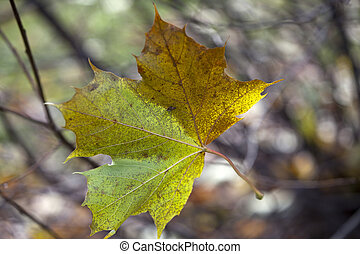 solitaire, feuille, -, automne, impressions, tomber
