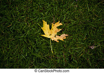 solitaire, feuille