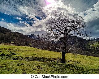 solitaire, forêt arbre