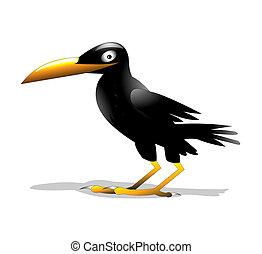 solitaire, isolé, oiseau, corbeau