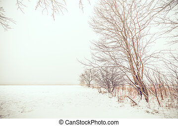 solitaire, neige, arbres