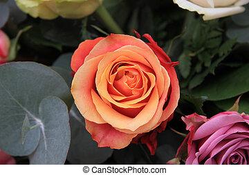 solitaire orange rose