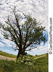 solitaire, route, arbre chêne