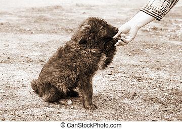 solitaire, sdf, chien, et, portion, main humaine