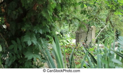 An old forgotten tombstone with overgrown vegetation on it.