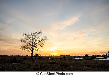 Solitaire tree at sunset