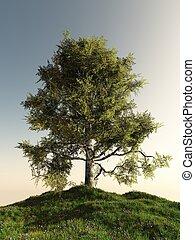 solitario, árbol, abedul