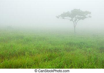solitario, árbol, en, mañana, niebla, en, el, pradera