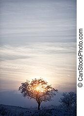 solitario, albero, a, tramonto, in, inverno
