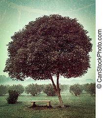 solitario, albero, e, vuoto, panca