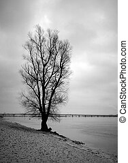 solitario, albero, fiume, banca