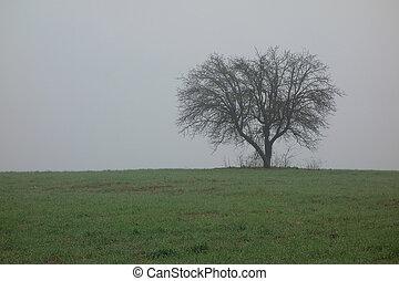 solitario, albero, in, il, nebbia, inverno