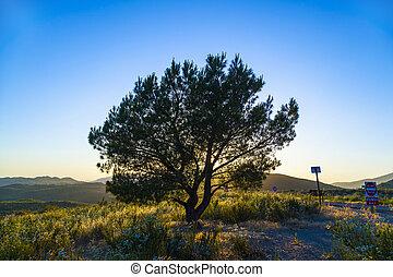 solitario, albero, in, tramonto