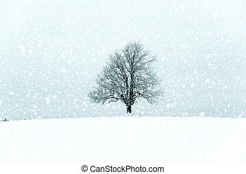solitario, albero, in, uno, inverno, landcape