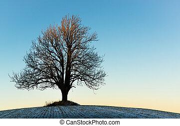 solitario, albero inverno, in, il, tramonto