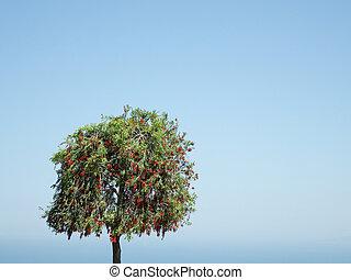solitario, albero, su, cielo, fondo