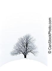 solitario, albero, su, uno, hilll, con, neve