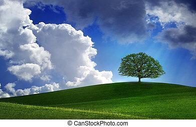 solitario, albero, su, verde, limare