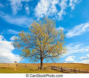 solitario, autunno, albero, su, cielo, fondo.
