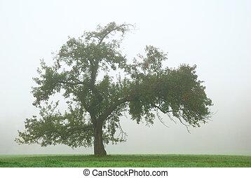 solitario, melo, nebbia, spesso, bianco