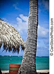 solitario, palma, tree-, choza