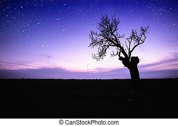 solitario, silhouette, stellato, sopra, albero, cielo
