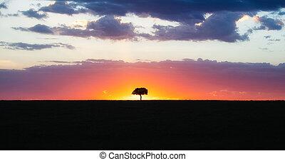solitario, silueta, colorido, árbol, ocaso, africano