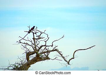 solitario, uccello, su, asciutto, twigs.