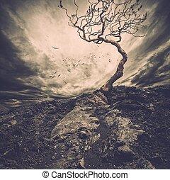 solitario, vecchio, cielo, sopra, albero, drammatico