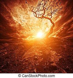 solitario, vecchio, sopra, albero, drammatico, tramonto